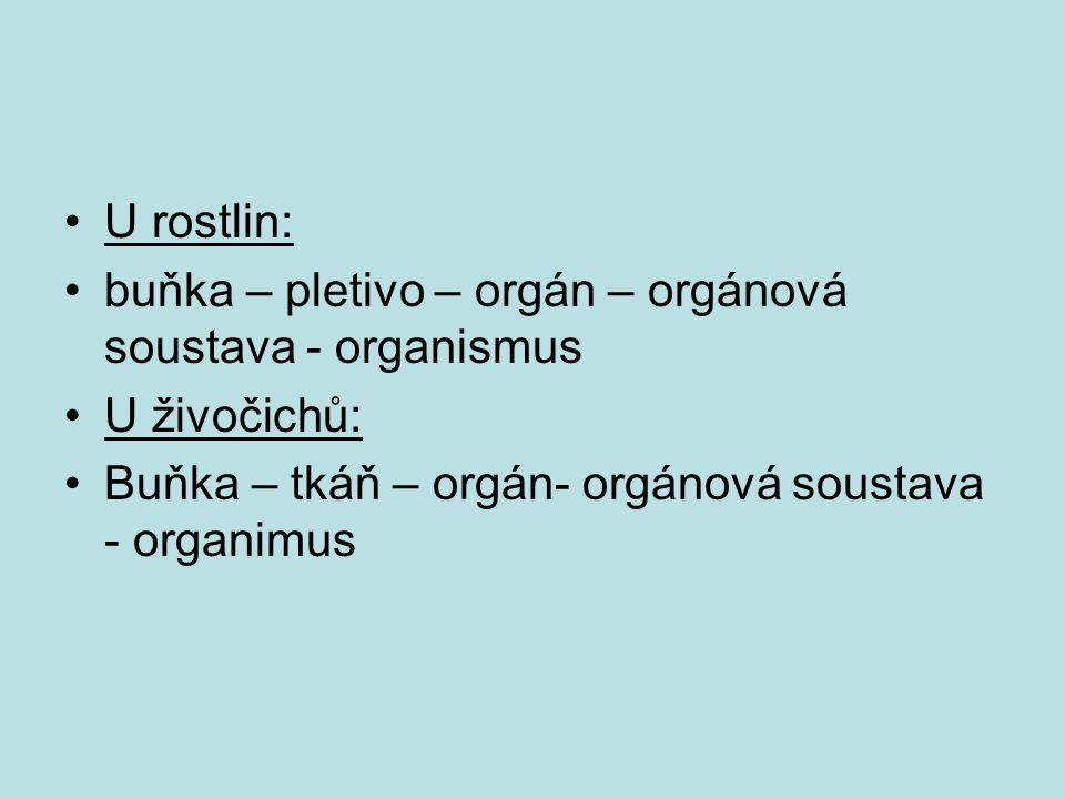 U rostlin: buňka – pletivo – orgán – orgánová soustava - organismus U živočichů: Buňka – tkáň – orgán- orgánová soustava - organimus