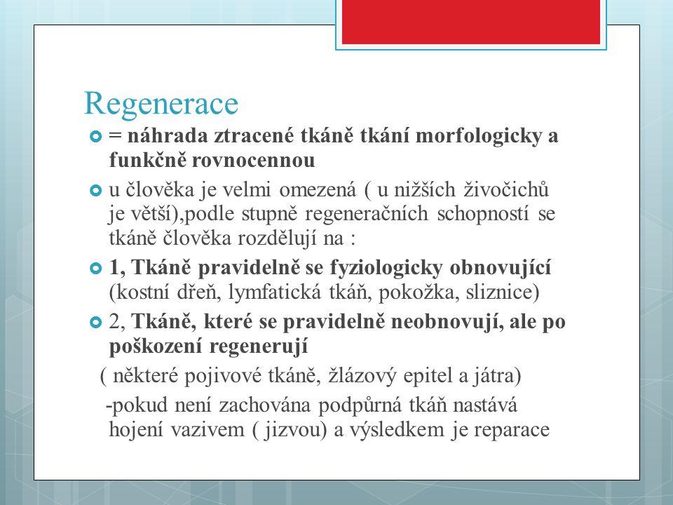 Regenerace  = náhrada ztracené tkáně tkání morfologicky a funkčně rovnocennou  u člověka je velmi omezená ( u nižších živočichů je větší),podle stupně regeneračních schopností se tkáně člověka rozdělují na :  1, Tkáně pravidelně se fyziologicky obnovující (kostní dřeň, lymfatická tkáň, pokožka, sliznice)  2, Tkáně, které se pravidelně neobnovují, ale po poškození regenerují ( některé pojivové tkáně, žlázový epitel a játra) -pokud není zachována podpůrná tkáň nastává hojení vazivem ( jizvou) a výsledkem je reparace