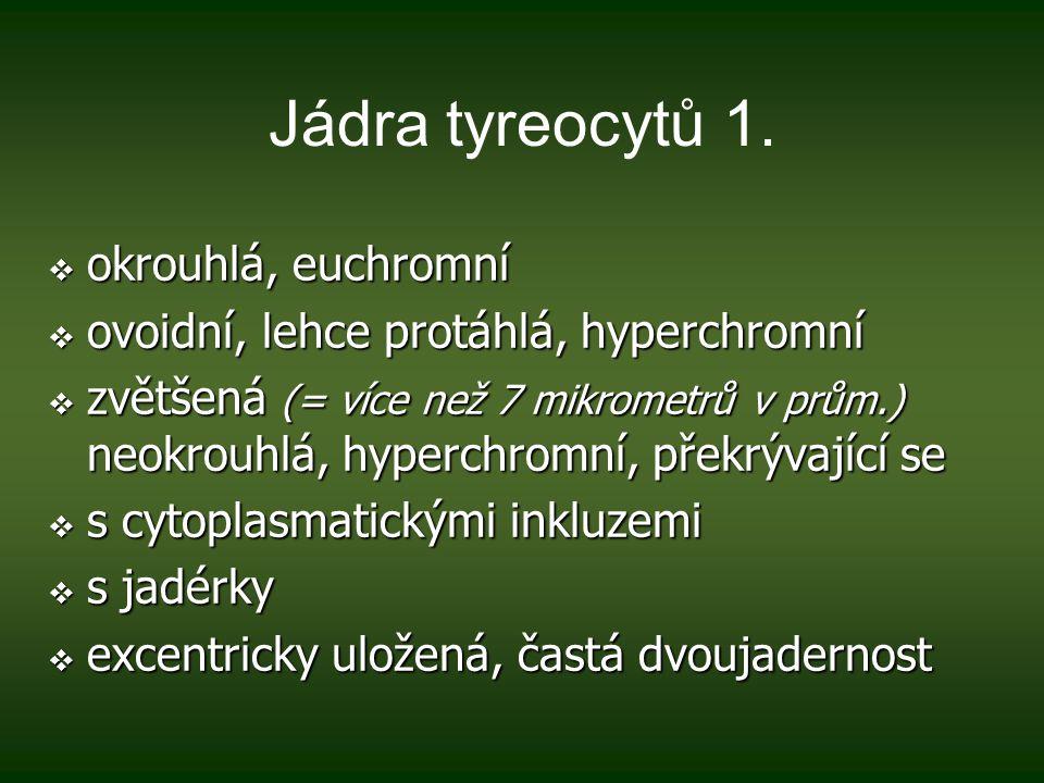 Jádra tyreocytů 1.