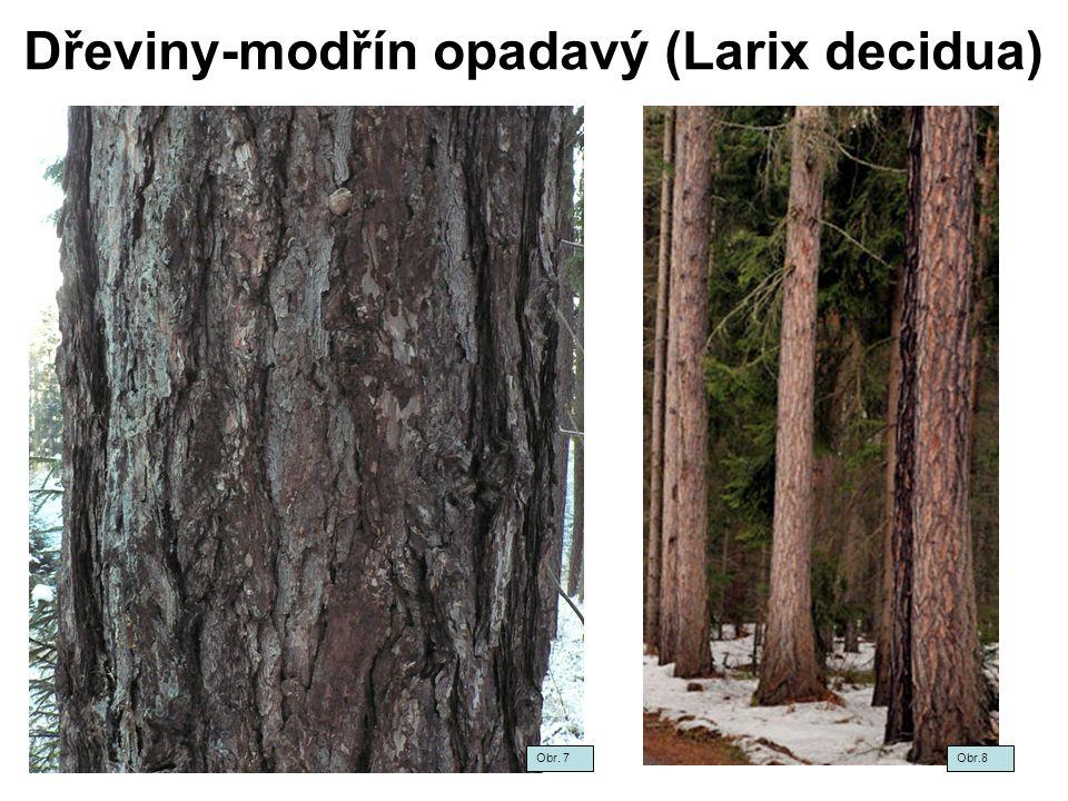 Dřeviny-modřín opadavý (Larix decidua) Obr.9 Obr.10