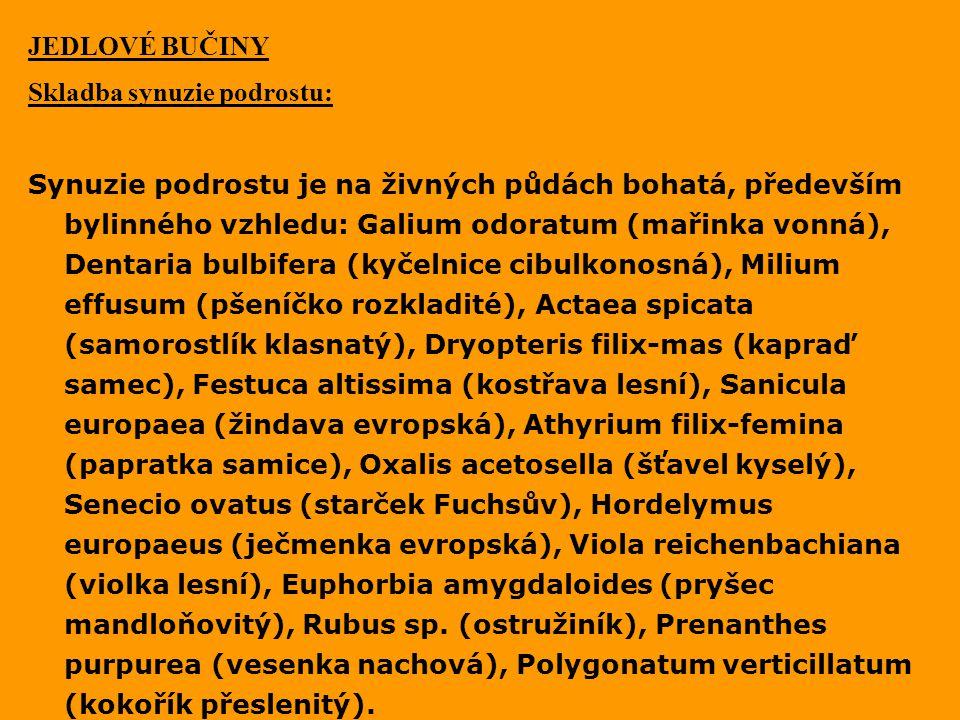 JEDLOVÉ BUČINY Skladba synuzie podrostu: Synuzie podrostu je na živných půdách bohatá, především bylinného vzhledu: Galium odoratum (mařinka vonná), D
