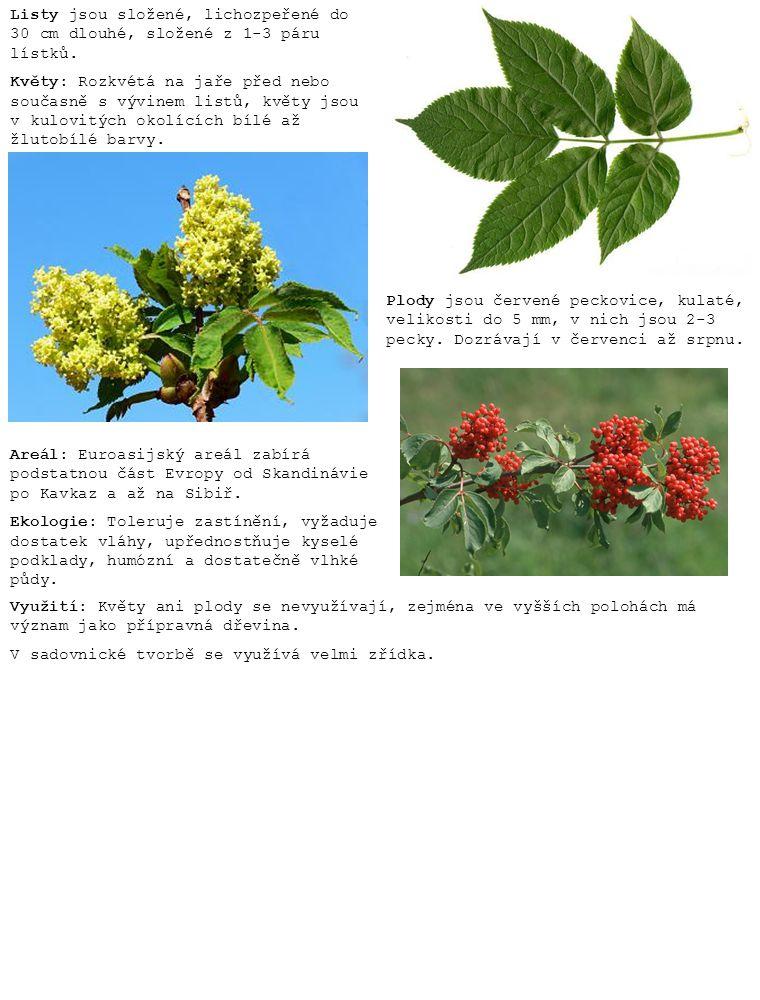 Listy jsou složené, lichozpeřené do 30 cm dlouhé, složené z 1-3 páru lístků. Květy: Rozkvétá na jaře před nebo současně s vývinem listů, květy jsou v