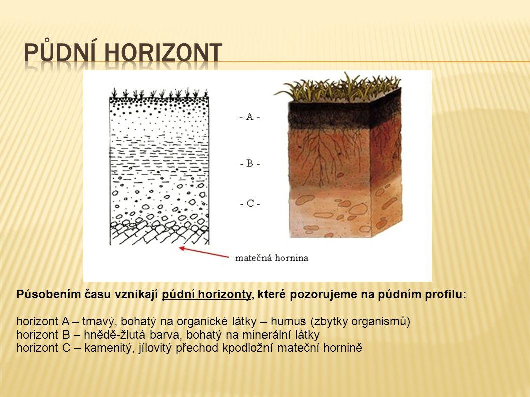 Působením času vznikají půdní horizonty, které pozorujeme na půdním profilu: horizont A – tmavý, bohatý na organické látky – humus (zbytky organismů) horizont B – hnědě-žlutá barva, bohatý na minerální látky horizont C – kamenitý, jílovitý přechod kpodložní mateční hornině