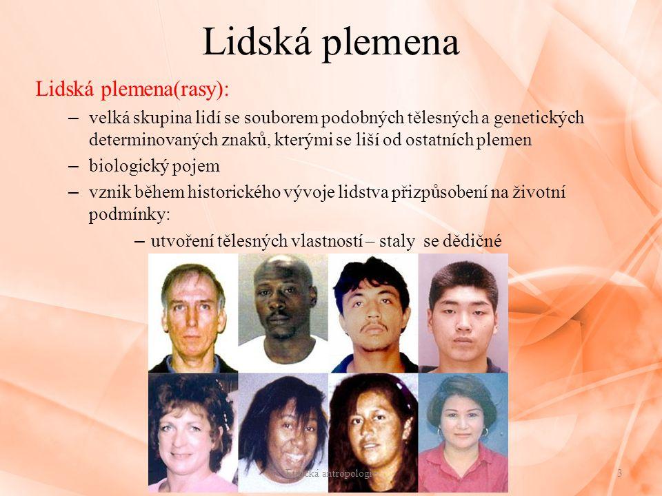 Lidská plemena Lidská plemena(rasy): – velká skupina lidí se souborem podobných tělesných a genetických determinovaných znaků, kterými se liší od osta