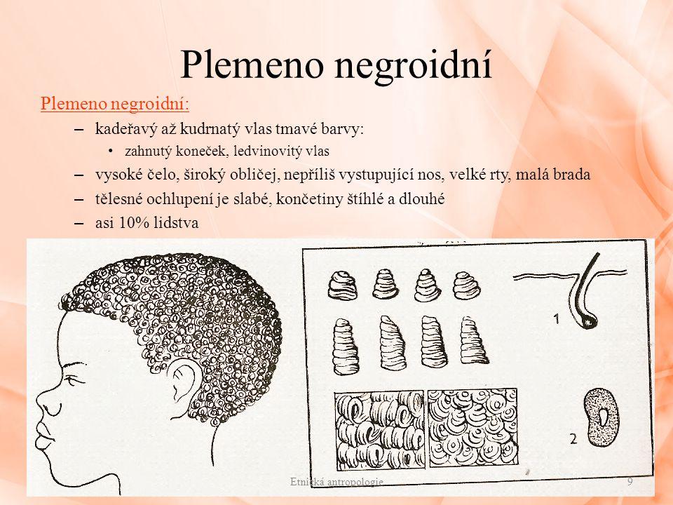 Plemeno negroidní Plemeno negroidní: – kadeřavý až kudrnatý vlas tmavé barvy: zahnutý koneček, ledvinovitý vlas – vysoké čelo, široký obličej, nepříli