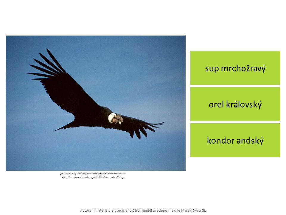 Autorem materiálu a všech jeho částí, není-li uvedeno jinak, je Marek Odstrčil. sup mrchožravý kondor andský orel královský [cit. 2012-10-04]. Dostupn
