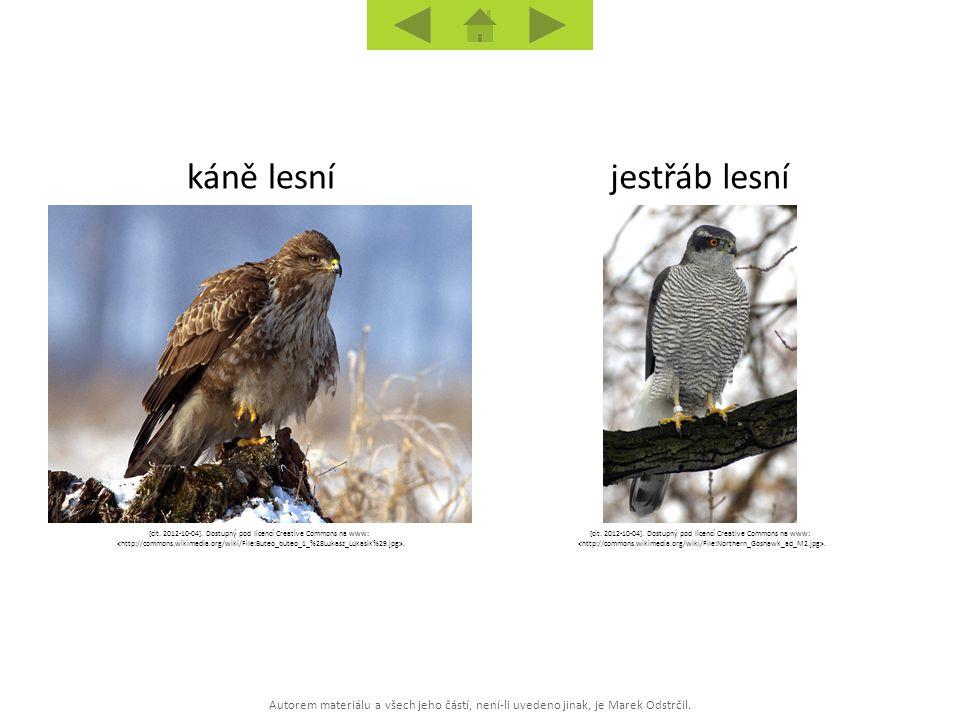 Autorem materiálu a všech jeho částí, není-li uvedeno jinak, je Marek Odstrčil. jestřáb lesníkáně lesní [cit. 2012-10-04]. Dostupný pod licencí Creati