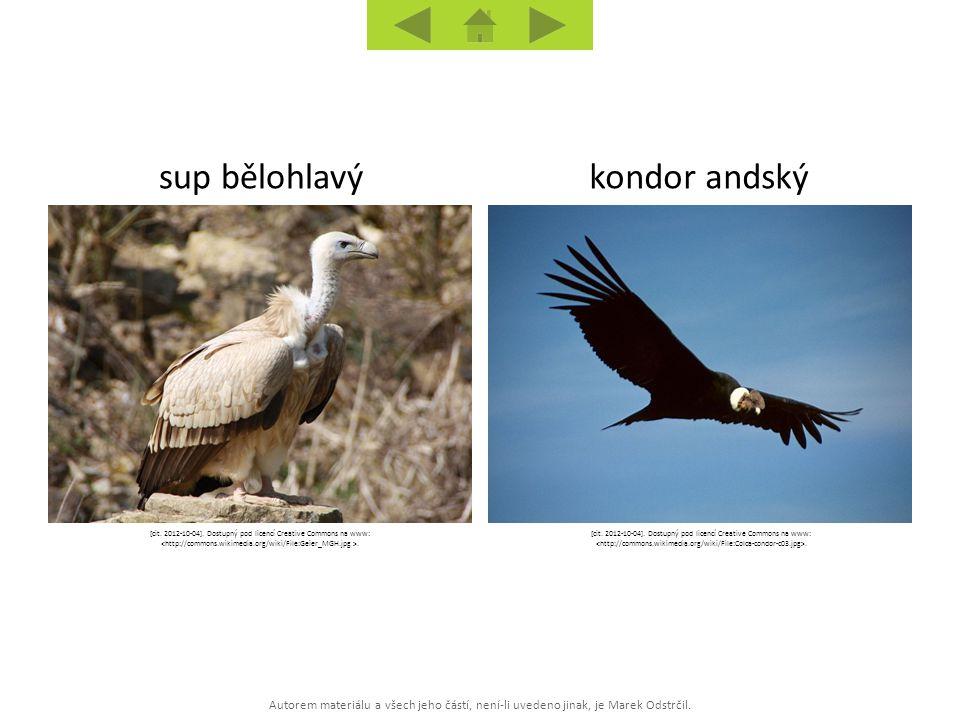 Autorem materiálu a všech jeho částí, není-li uvedeno jinak, je Marek Odstrčil. kondor andskýsup bělohlavý [cit. 2012-10-04]. Dostupný pod licencí Cre