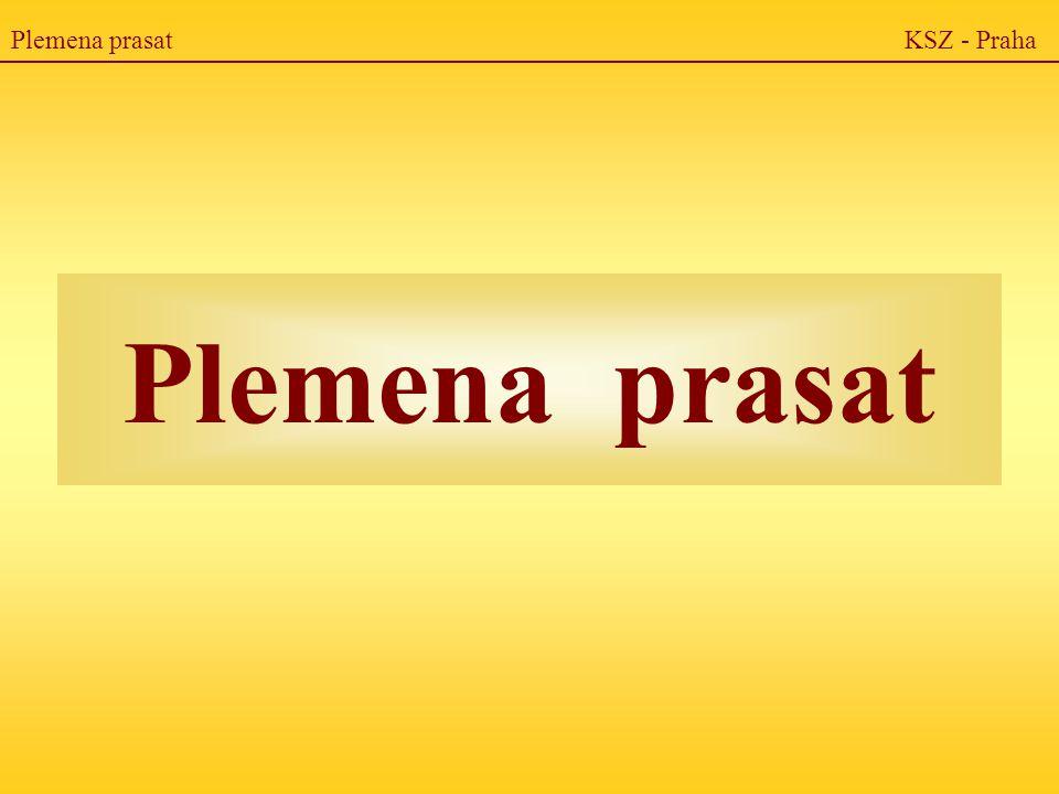 Plemena prasat KSZ - Praha Plemena prasat