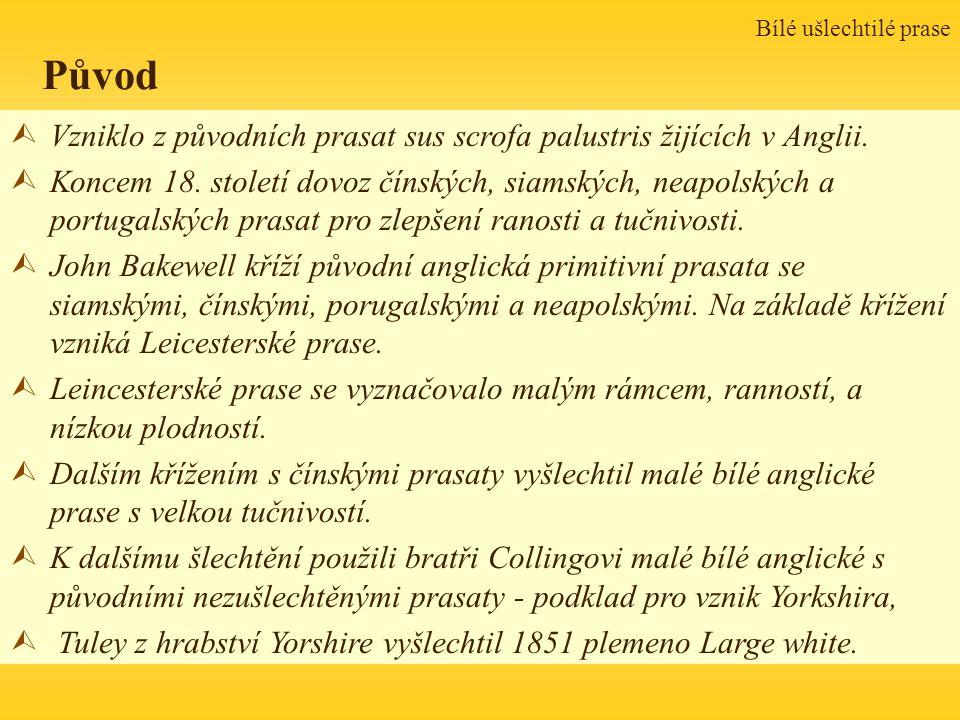 Bílé ušlechtilé prase Původ ÙVzniklo z původních prasat sus scrofa palustris žijících v Anglii. ÙKoncem 18. století dovoz čínských, siamských, neapols