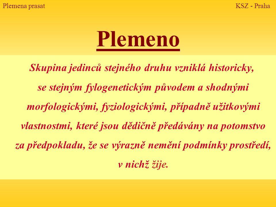 Pietrain ÙNejmladší plemeno v západní Evropě ÙO původu plemene existuje několik hypotéz: 1.