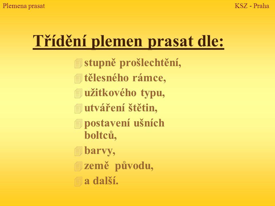 Duroc (D) Plemena prasat KSZ - Praha