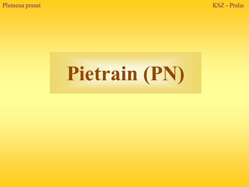 Pietrain (PN) Plemena prasat KSZ - Praha