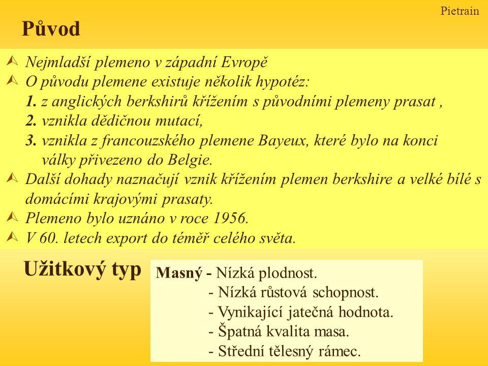 Pietrain ÙNejmladší plemeno v západní Evropě ÙO původu plemene existuje několik hypotéz: 1. z anglických berkshirů křížením s původními plemeny prasat