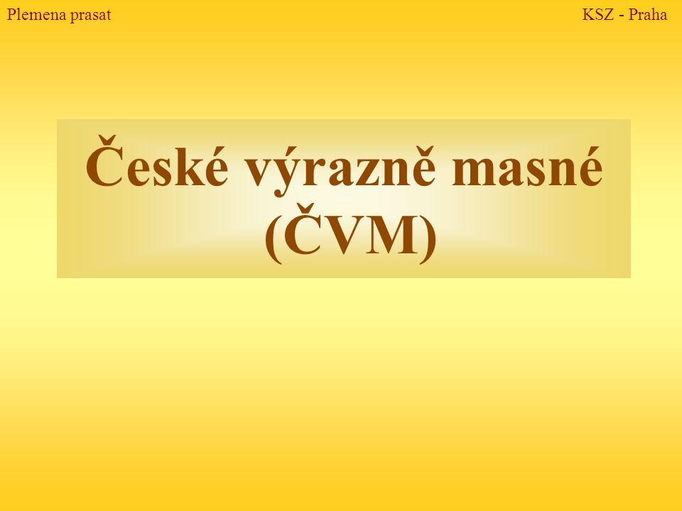 České výrazně masné (ČVM) Plemena prasat KSZ - Praha