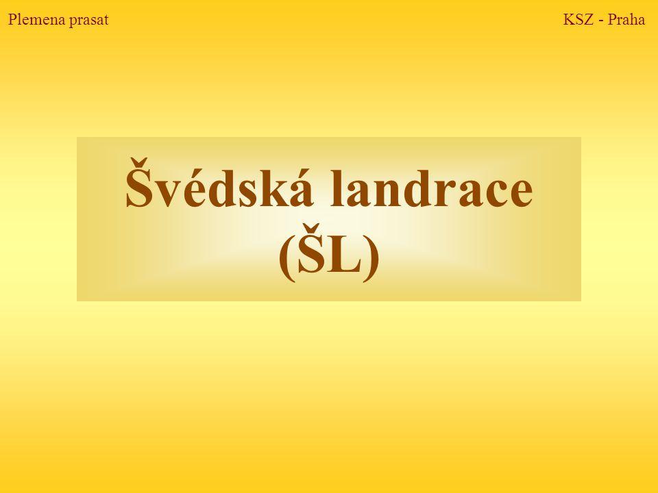 Švédská landrace (ŠL) Plemena prasat KSZ - Praha