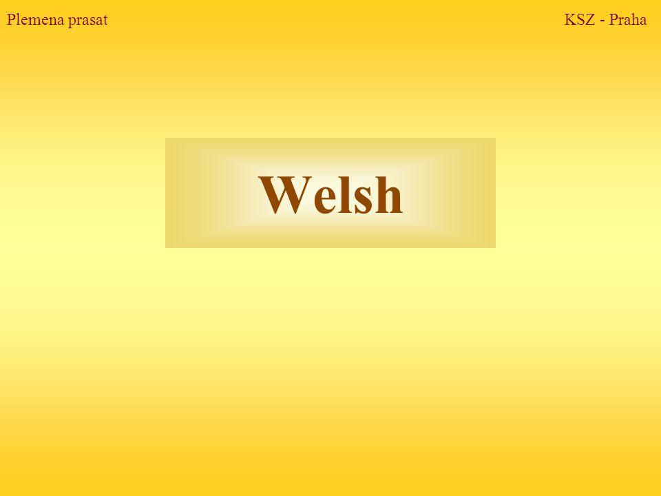 Welsh Plemena prasat KSZ - Praha