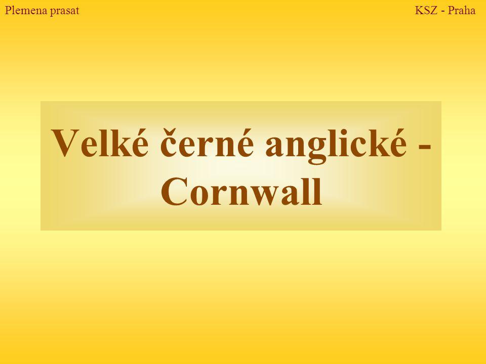 Velké černé anglické - Cornwall Plemena prasat KSZ - Praha