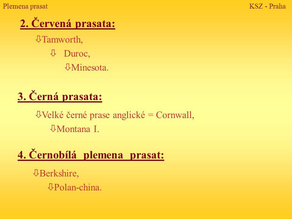 2. Červená prasata: ò Tamworth, ò Duroc, ò Minesota. 3. Černá prasata: ò Velké černé prase anglické = Cornwall, ò Montana I. 4. Černobílá plemena pras