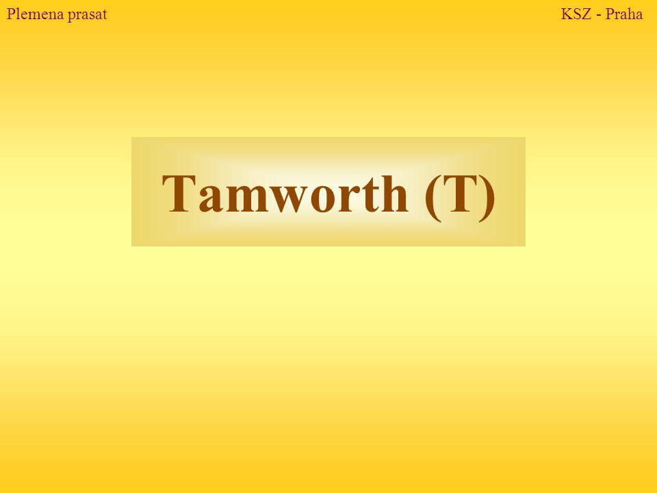 Tamworth (T) Plemena prasat KSZ - Praha