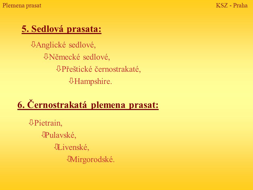 Vývoj chovu prasat v ČR 4 Chov v minulosti minimálně rozvíjen.