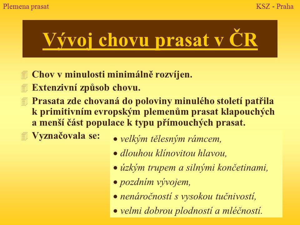 Vývoj chovu prasat v ČR 4 Chov v minulosti minimálně rozvíjen. 4 Extenzivní způsob chovu. 4 Prasata zde chovaná do poloviny minulého století patřila k