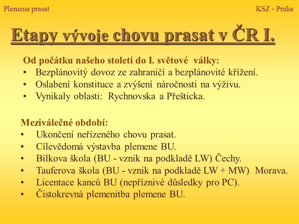 Etapy vývoje chovu prasat v ČR I.Od počátku našeho století do I.