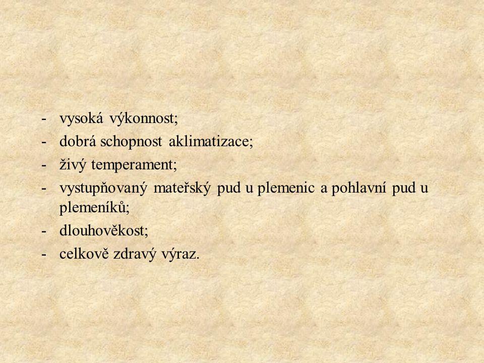 Příklady plemen pevné konstituce: kráva českého strakatého plemene