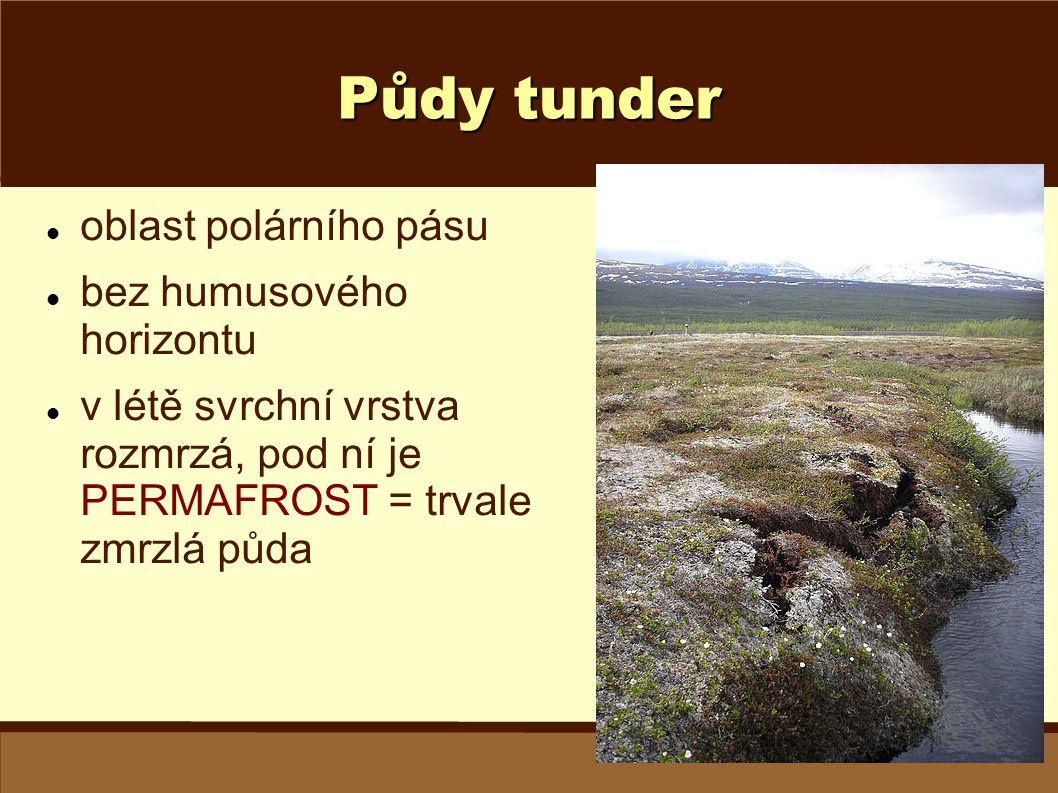 Půdy tunder oblast polárního pásu bez humusového horizontu v létě svrchní vrstva rozmrzá, pod ní je PERMAFROST = trvale zmrzlá půda