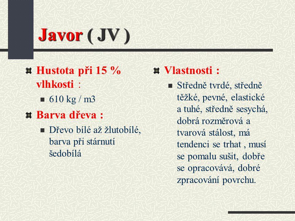 Javor ( Acer platanoides L.