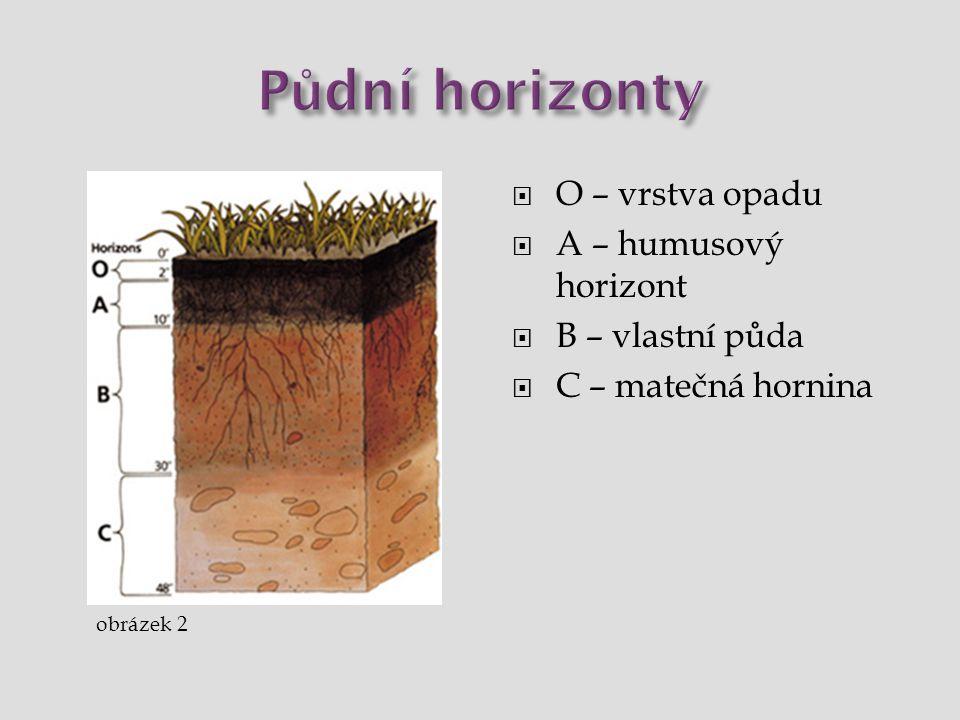  O – vrstva opadu  A – humusový horizont  B – vlastní půda  C – matečná hornina obrázek 2