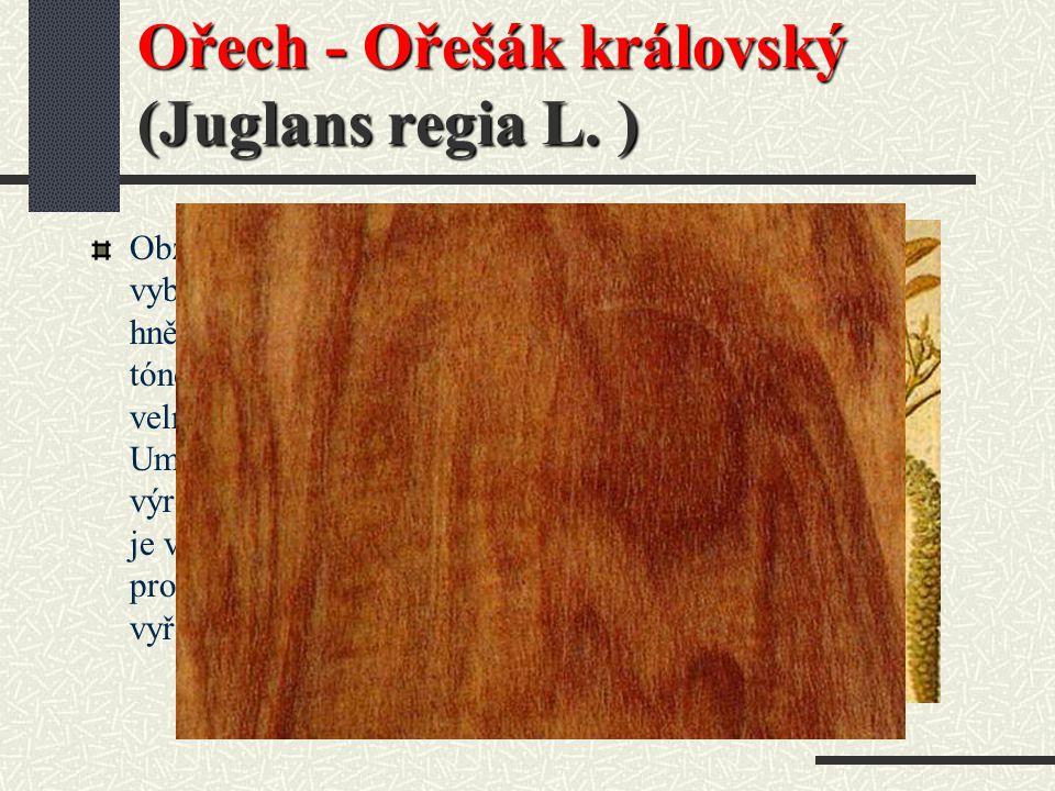 Olše ( OL ) Použití : Modelářské a truhlářské práce, nábytek, hudební nástroje, obrazové lišty, dýhy, dřevěné materiály. Odolnost : Neodolné proti pov
