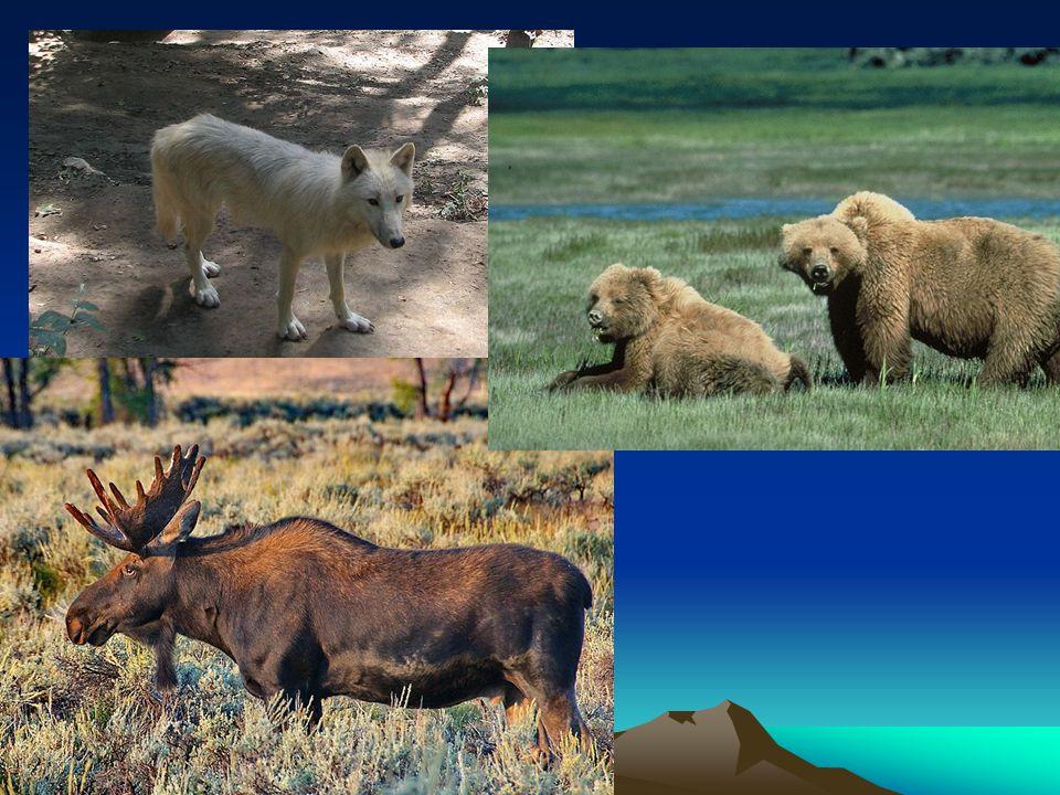 Mírný pás – listnaté lesy Oblast Velkých jezer, Apalačské pohoří Dnes zemědělství Fauna – mýval, skunk, bobr, množství ptáků