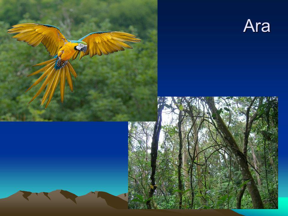 Tropické středně vlhké podnebí – savany a řídké lesy Fauna – tapír, tukan, jaguár