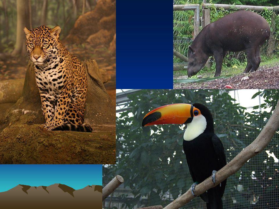 Jihoamerické stepi - pampy Dnes obilnice, pastviny pro dobytek Fauna – nandu pampový, mara stepní