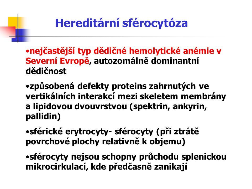 Hereditární sférocytóza nejčastější typ dědičné hemolytické anémie v Severní Evropě, autozomálně dominantní dědičnost způsobená defekty proteins zahrn