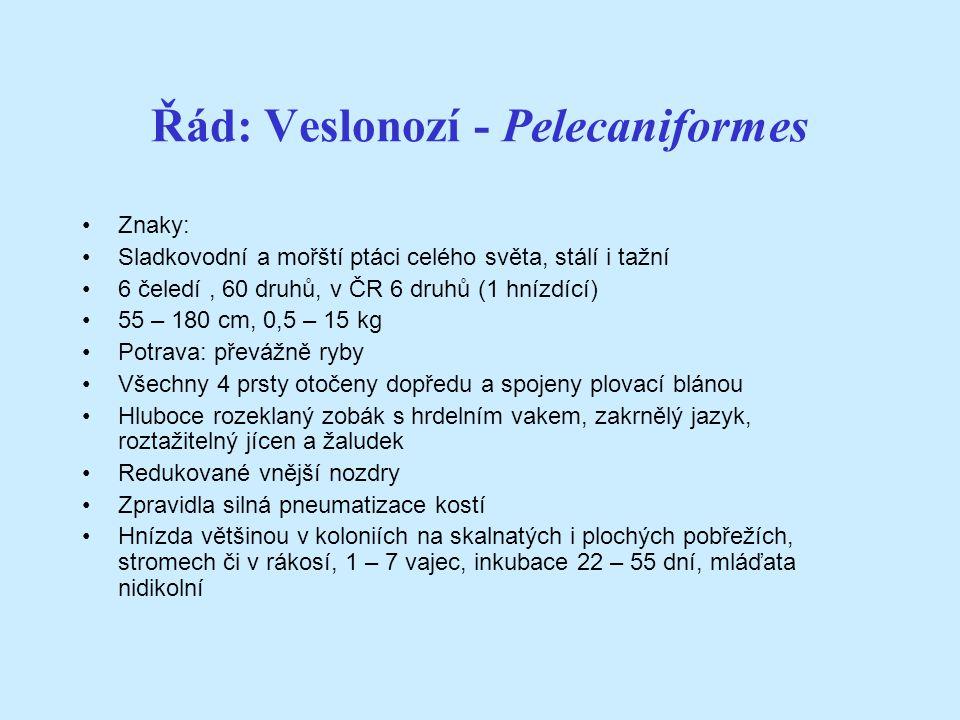 Řád: Veslonozí - Pelecaniformes Znaky: Sladkovodní a mořští ptáci celého světa, stálí i tažní 6 čeledí, 60 druhů, v ČR 6 druhů (1 hnízdící) 55 – 180 cm, 0,5 – 15 kg Potrava: převážně ryby Všechny 4 prsty otočeny dopředu a spojeny plovací blánou Hluboce rozeklaný zobák s hrdelním vakem, zakrnělý jazyk, roztažitelný jícen a žaludek Redukované vnější nozdry Zpravidla silná pneumatizace kostí Hnízda většinou v koloniích na skalnatých i plochých pobřežích, stromech či v rákosí, 1 – 7 vajec, inkubace 22 – 55 dní, mláďata nidikolní