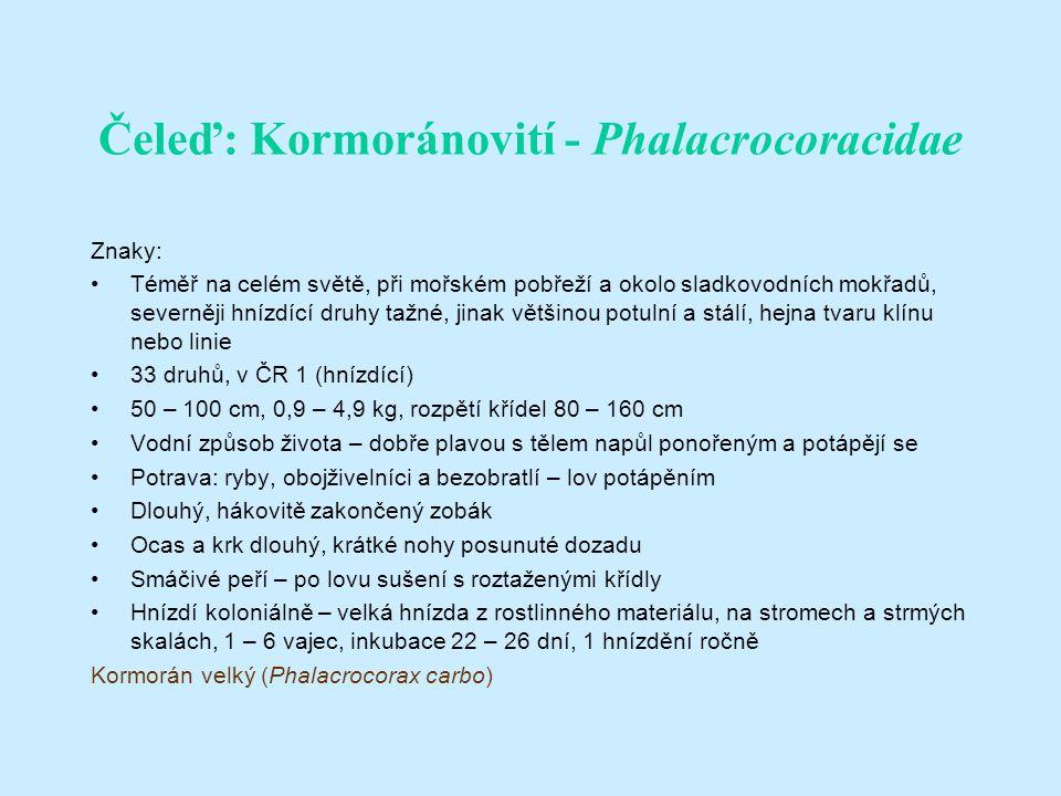 Čeleď: Kormoránovití - Phalacrocoracidae Znaky: Téměř na celém světě, při mořském pobřeží a okolo sladkovodních mokřadů, severněji hnízdící druhy tažné, jinak většinou potulní a stálí, hejna tvaru klínu nebo linie 33 druhů, v ČR 1 (hnízdící) 50 – 100 cm, 0,9 – 4,9 kg, rozpětí křídel 80 – 160 cm Vodní způsob života – dobře plavou s tělem napůl ponořeným a potápějí se Potrava: ryby, obojživelníci a bezobratlí – lov potápěním Dlouhý, hákovitě zakončený zobák Ocas a krk dlouhý, krátké nohy posunuté dozadu Smáčivé peří – po lovu sušení s roztaženými křídly Hnízdí koloniálně – velká hnízda z rostlinného materiálu, na stromech a strmých skalách, 1 – 6 vajec, inkubace 22 – 26 dní, 1 hnízdění ročně Kormorán velký (Phalacrocorax carbo)