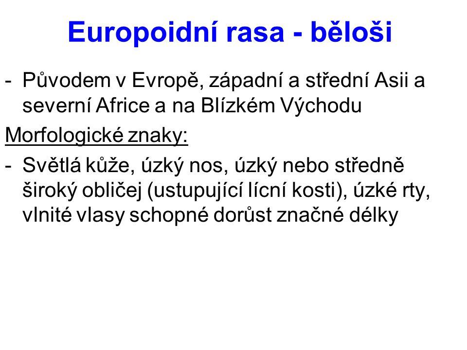 Europoidní rasa - běloši -Původem v Evropě, západní a střední Asii a severní Africe a na Blízkém Východu Morfologické znaky: -Světlá kůže, úzký nos, ú