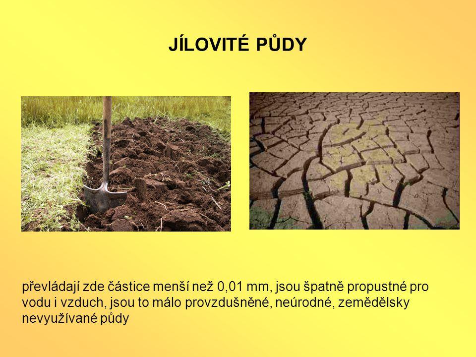 JÍLOVITÉ PŮDY převládají zde částice menší než 0,01 mm, jsou špatně propustné pro vodu i vzduch, jsou to málo provzdušněné, neúrodné, zemědělsky nevyužívané půdy