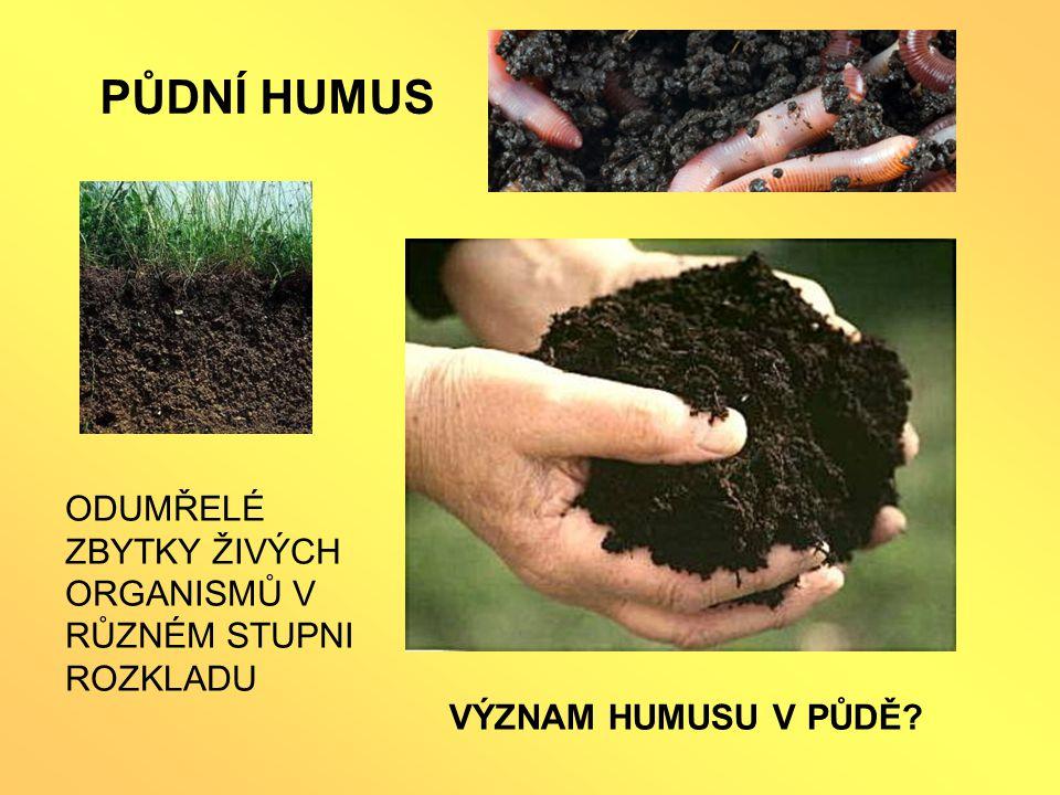 PŮDNÍ PROFIL Půdní horizonty O - Organická hmota A - Humusový horizont B - spodní anorganický horizont C - podložní hornina