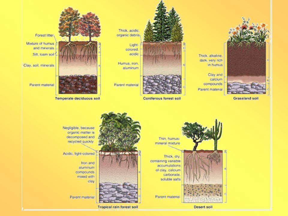 VLASTNOSTI PŮD ZRNITOST (TEXTURA) - je vyjádřena poměrným zastoupení jemnozemě v pevné složce půdy (hrubost nebo jemnost).