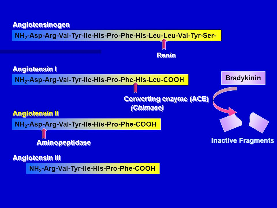 NH 2 -Asp-Arg-Val-Tyr-Ile-His-Pro-Phe-His-Leu-Leu-Val-Tyr-Ser- NH 2 -Asp-Arg-Val-Tyr-Ile-His-Pro-Phe-His-Leu-COOH NH 2 -Asp-Arg-Val-Tyr-Ile-His-Pro-Phe-COOH NH 2 -Arg-Val-Tyr-Ile-His-Pro-Phe-COOH Angiotensinogen Angiotensin I Angiotensin II Angiotensin III Renin Converting enzyme (ACE) Aminopeptidase (Chimase) Bradykinin Inactive Fragments