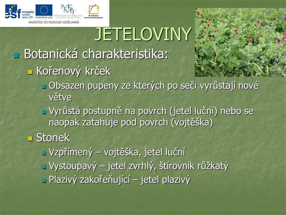 JETELOVINY Botanická charakteristika: Botanická charakteristika: Kořenový krček Kořenový krček Obsazen pupeny ze kterých po seči vyrůstají nové větve