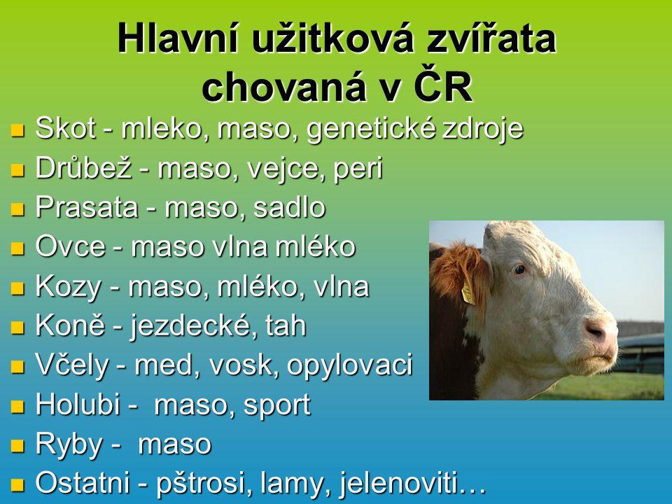 Hlavní užitková zvířata chovaná v ČR Skot - mleko, maso, genetické zdroje Skot - mleko, maso, genetické zdroje Drůbež - maso, vejce, peri Drůbež - maso, vejce, peri Prasata - maso, sadlo Prasata - maso, sadlo Ovce - maso vlna mléko Ovce - maso vlna mléko Kozy - maso, mléko, vlna Kozy - maso, mléko, vlna Koně - jezdecké, tah Koně - jezdecké, tah Včely - med, vosk, opylovaci Včely - med, vosk, opylovaci Holubi - maso, sport Holubi - maso, sport Ryby - maso Ryby - maso Ostatni - pštrosi, lamy, jelenoviti… Ostatni - pštrosi, lamy, jelenoviti…