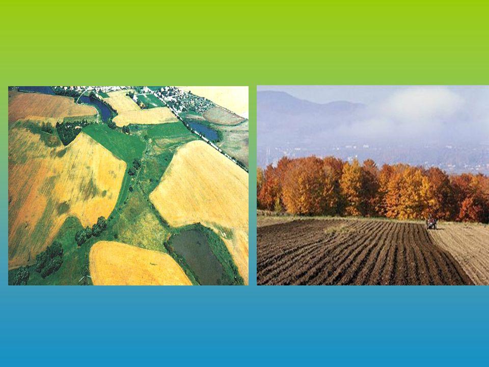 Podmínky pro zemědělství Charakter reliéfu (svahovitost a nadmořská výška) Půdní předpoklady (zrnitost a typ půdy) Klima (teplota,srážkové poměry)
