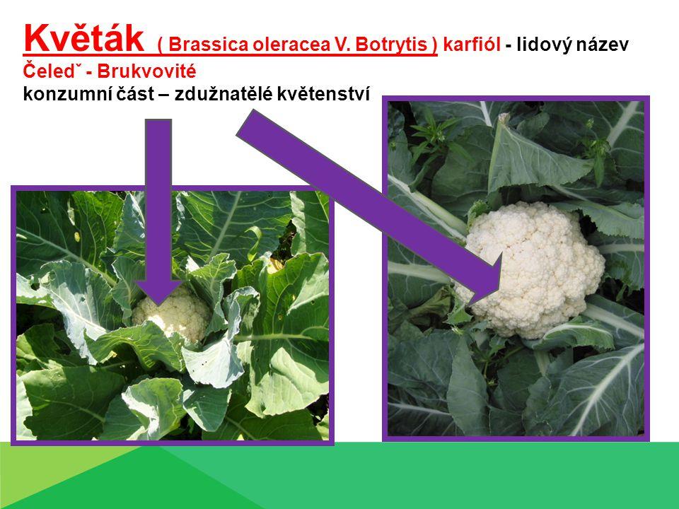 Květák ( Brassica oleracea V. Botrytis ) karfiól - lidový název Čeledˇ - Brukvovité konzumní část – zdužnatělé květenství