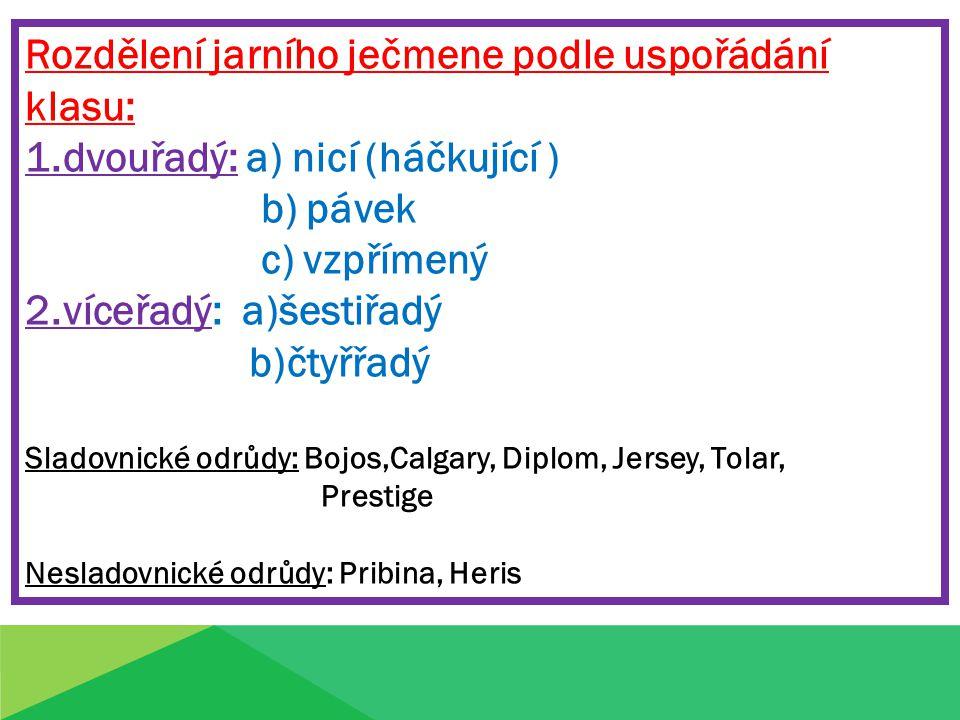 Rozdělení jarního ječmene podle uspořádání klasu: 1.dvouřadý: a) nicí (háčkující ) b) pávek c) vzpřímený 2.víceřadý: a)šestiřadý b)čtyřřadý Sladovnické odrůdy: Bojos,Calgary, Diplom, Jersey, Tolar, Prestige Nesladovnické odrůdy: Pribina, Heris