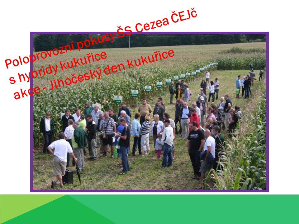 Poloprovozní pokusy ŠS Cezea ČEJč s hybridy kukuřice akce - Jihočeský den kukuřice