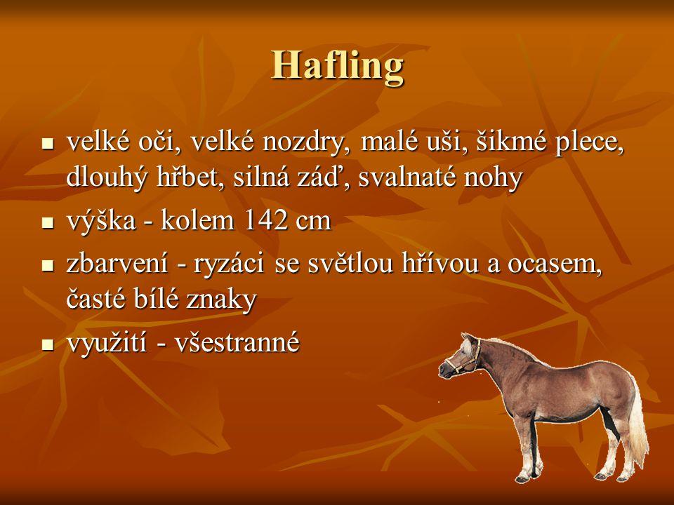 Hafling velké oči, velké nozdry, malé uši, šikmé plece, dlouhý hřbet, silná záď, svalnaté nohy velké oči, velké nozdry, malé uši, šikmé plece, dlouhý